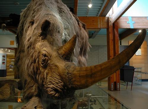 Гипотеза Черной Королевы объяснила вымирание древних зверей