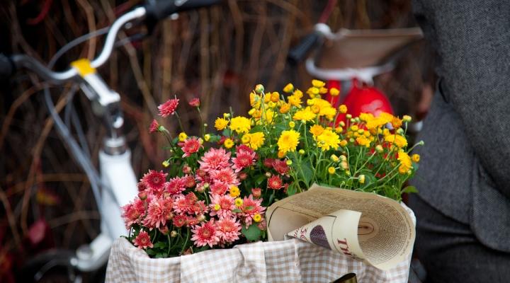 «Like2bike». Осенний велокарнавал